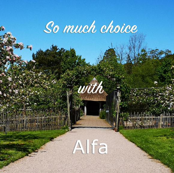 So much choice with Alfa